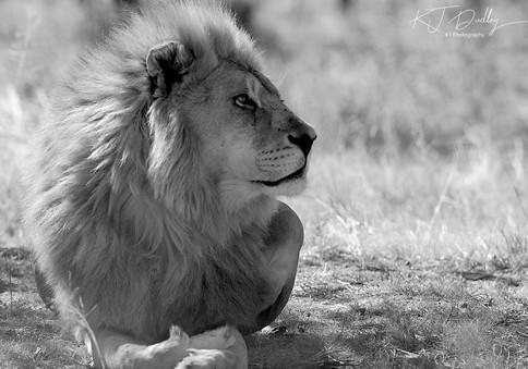His majesty.jpg