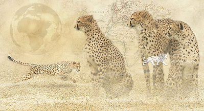 In a heartbeat - Cheetah - A3 digital artwork Giclee print