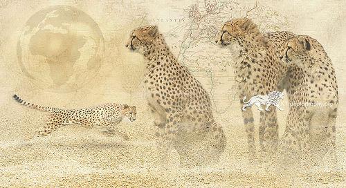 In a heartbeat - Cheetah - A3 digital artwork Giclee print