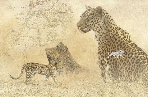 Heart of Africa - Leopard - A3 digital artwork Giclee print