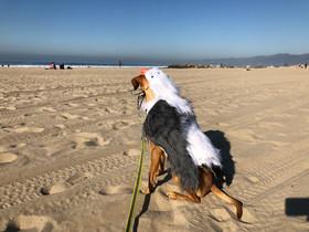 Bird Dog? Happy Dog-O-Ween!