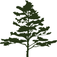 WausaUltra Tree - favicon.png