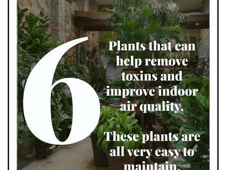 Flower Fun Facts with MassalleyDesign.com: Improving your indoor air quality.