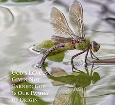 dragonfly website.jpg