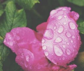 Rain, Rest, Renewal.