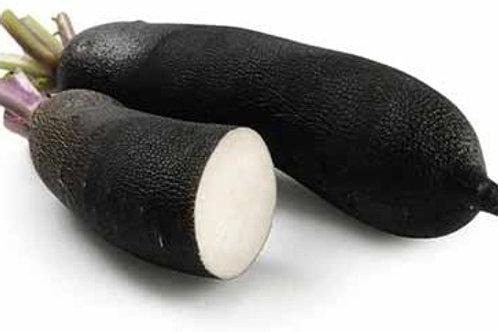 Radis noir (racine) BIO