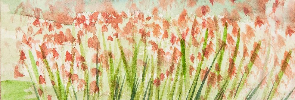 Pink Grasses