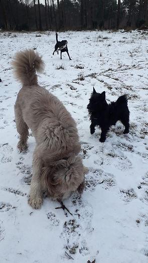 Dogs in Owlbeech Woods