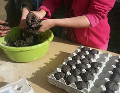jardin potager bien être entreprise création animation de jardins potagers bombes a graines