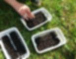 jardin potager bien être entreprise création animation de jardins potagers semis