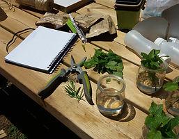 herbes sauvages.jpg
