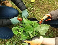 jardin potager bien être entreprise création animation de jardins potagers purins préparations naturelles