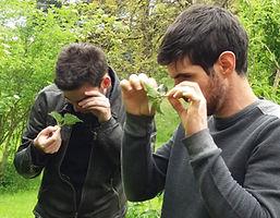 jardin potager bien être entreprise création animation de jardins potagers herbes sauvages