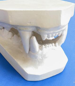Teeth of a Lion .jpeg