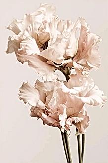 21hdix poésie florale