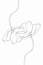 fleuriste_edited.png