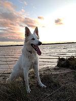 Le temps du chien éducateur canin à Béziers