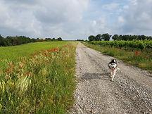 Le temps du chien promeneur chiens à Béziers