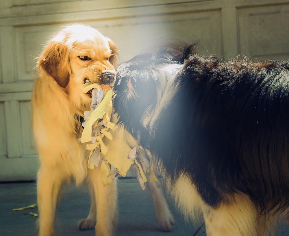 Promeneur chien Nîmes et Montpellier Le temps du chien