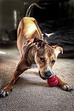 Le temps du chien garde animaux à domicile à Béziers