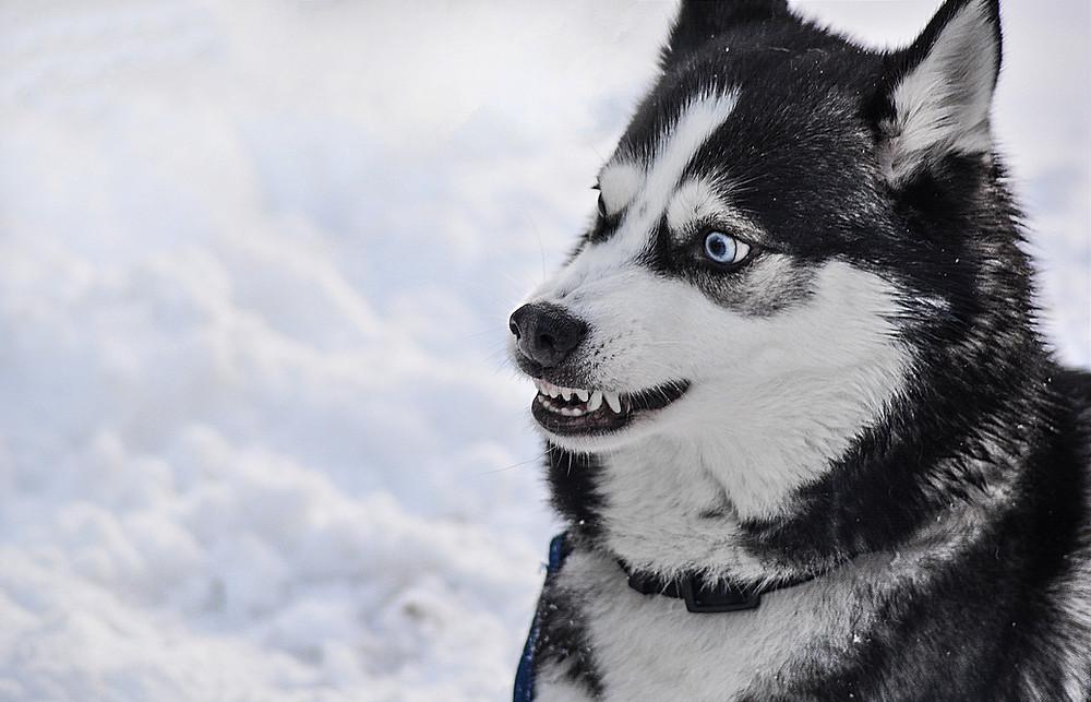 Le temps du chien Educateur canin comportementaliste Nîmes et Montpellier