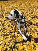 Le temps du chien conseil avant adoption chien Béziers