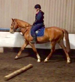 Next year wobbleberry - first time sitting on rescue horse