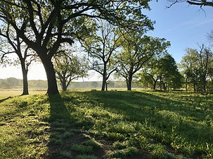 Tallgrass Dreaming