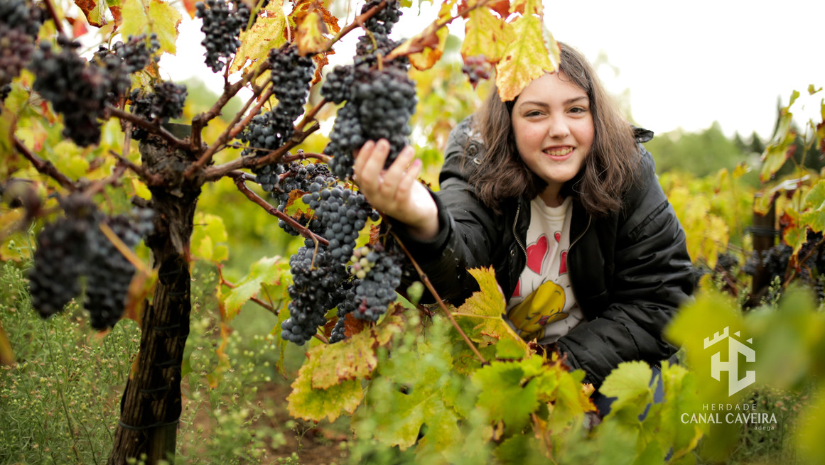 Catarina in the Grapes