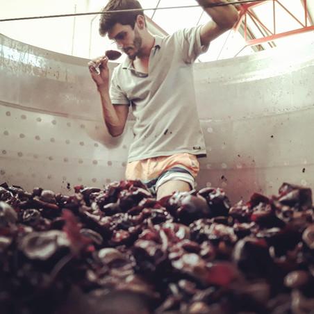 Rui treading grapes