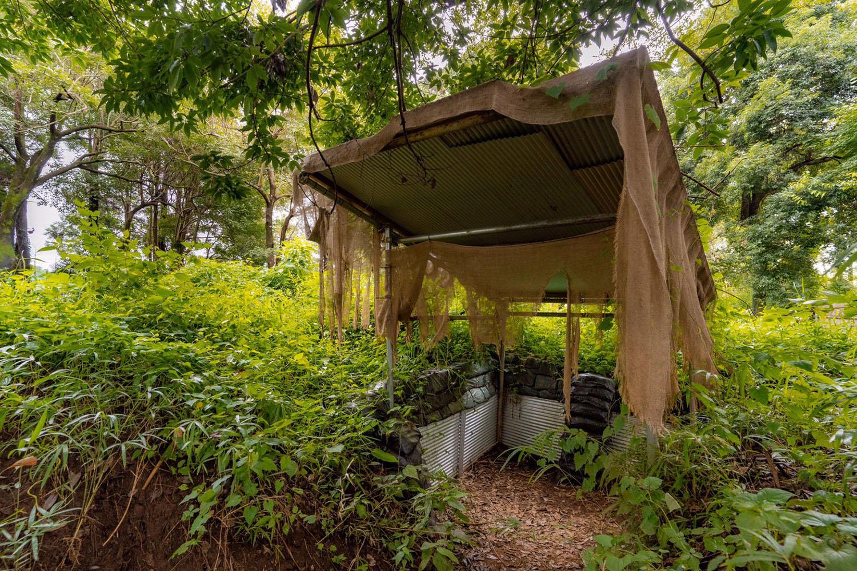 屋外型フィールドオペフリの森林地帯