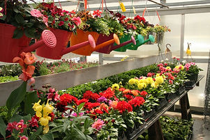 Cheerful pots at Farmington Greenhouse.jpg