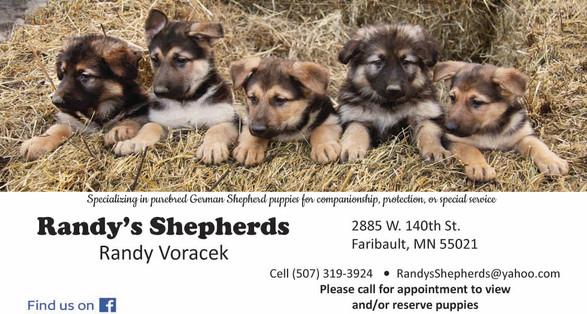 Marketing Studio - Randy's Shepherds Business Card