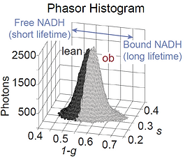 Phasor plot.PNG