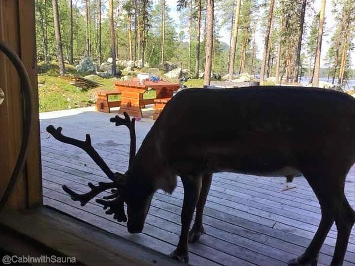 Reindeer friend visiting
