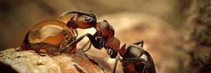 ants-1588893834408-1209_edited.jpg