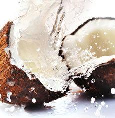 Coconut (Shake & Vape)