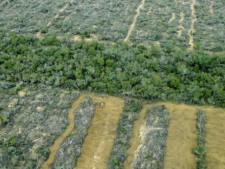 Ley de bosques: una deuda pendiente a 13 años de su sanción