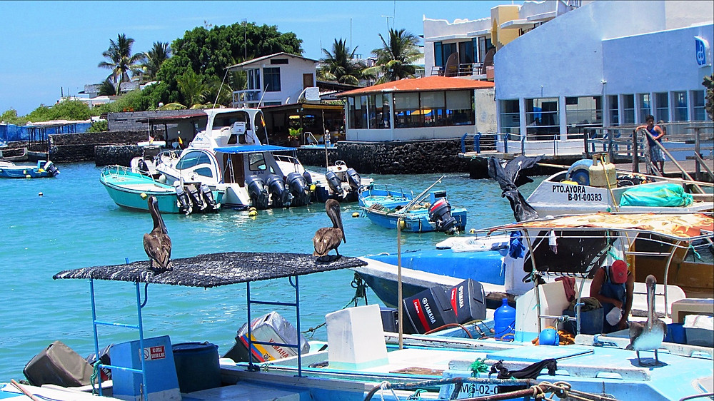 From Puerto Ayora you can get transportation to many of the other islands, but prepare for very long trips.