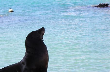 Galápagos: A delicate fragile wonder.