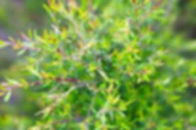 plant jpg.jpg