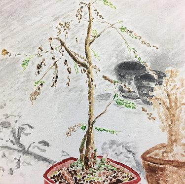 Cheung Tsz Hin, Plant II, 2017, Oil on Canvas, 30x30cm