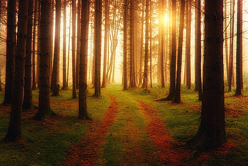 Forest with Sunlight.jpg