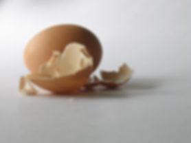 egg-shell-5-1556556.jpg