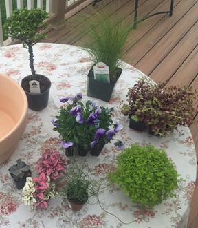 How to Build A Mossy Fairy Garden – Beebledee Bop