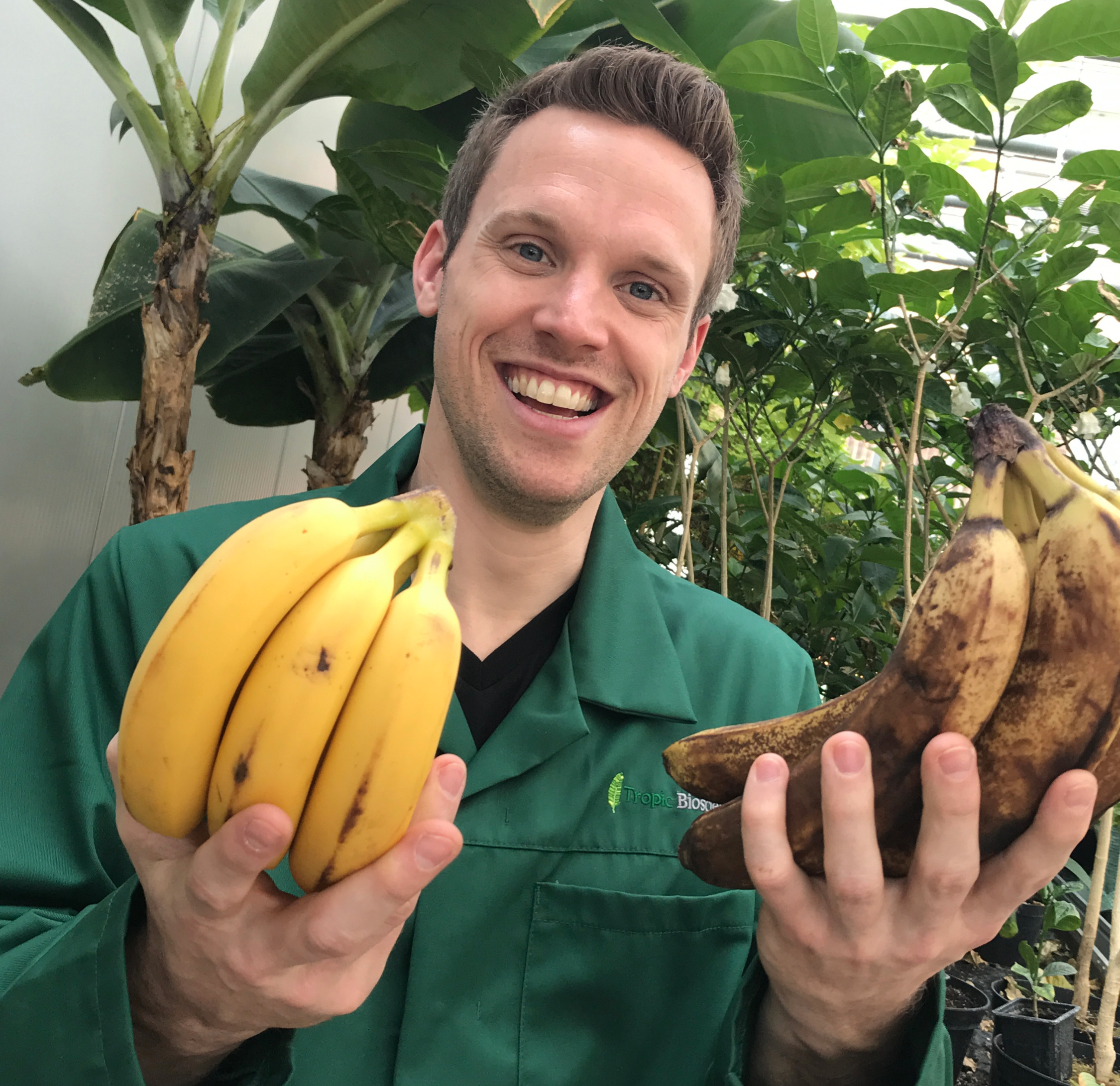 Greg holding gene edited bananas