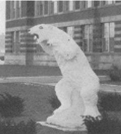 pbear1962.jpg