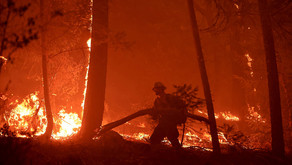 California Fires: How To Help