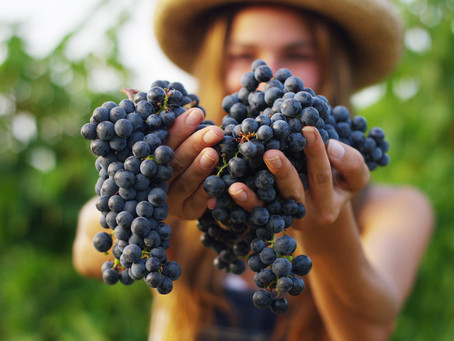 Winemaker Chats: Part Two