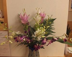 今日の花 クルクマ デンファレ